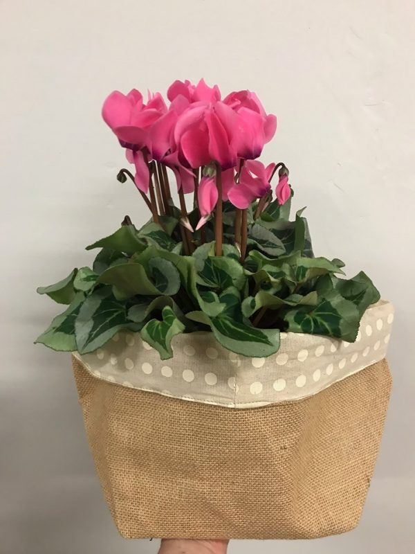 mothers day gift, mothers day tamworth, flower shop tamworth, tamworth gifts, florist tamworth, tamworth florist, gifts for mum