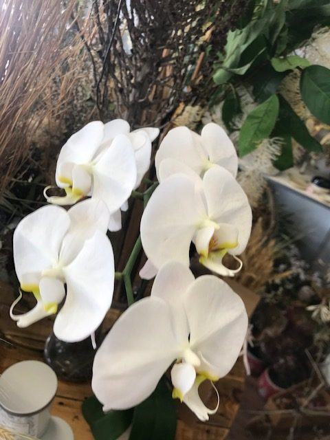 orchid, plant delivery, sympathy gift, flowering plant, tamworth plants,