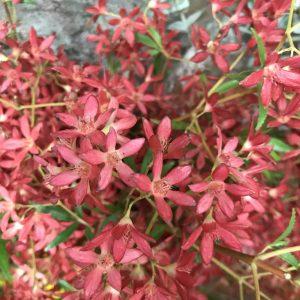 Christmas flowers, Christmas Tamworth, Tamworth Christmas, Tamworth flowers, Tamworth florist, Shop Local, Buy From the Bush