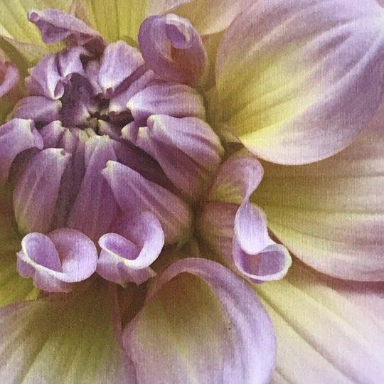botanic print, botanic, botanic art, botanic, flower shop tamworth, tamworth flower shop, tamworth florist, florist tamworth, tamworth flower shop, shop mothers day, mothers day gift, mothers day market, dahlia, succulent,