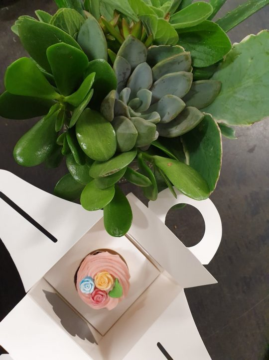 mothers day, mothers day gift, cupcakes, succulent, mothers day delivery tamworth, tamworth florist, tamworth mothers day delivery