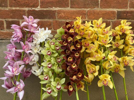 cymbidium orchid bouquet, tamworth flowers, tamworth florist, florist tamworth, daily flowers, flower delivery, florist