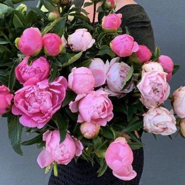 peony, peony bouquet, new england peony, new england peonies, local peonies, peony season, peony tamworth, tamworth flowers, tamworth florist, manilla florist, barraba florist, quirindi florist,