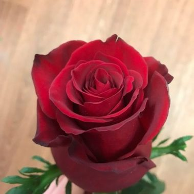 Red rose, valentines day, red roses, rose delivery tamworth, tamworth rose delivery, Tamworth florist,